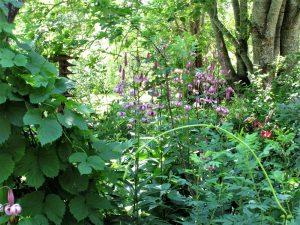 Avoimet puutarhat, viisi kohdetta lähimaastossa