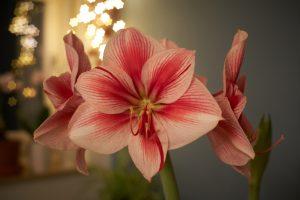 Miksi pitäisi ostaa kukat kukkakaupasta?