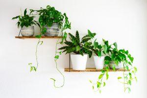 Helppoja viherkasveja kotiin